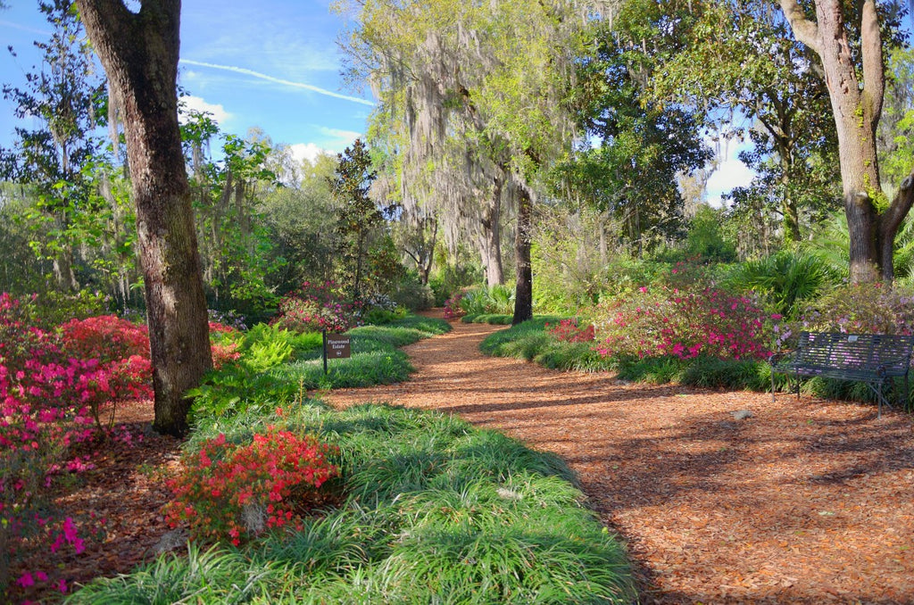 Florida Trees and Plants for Your Climate
