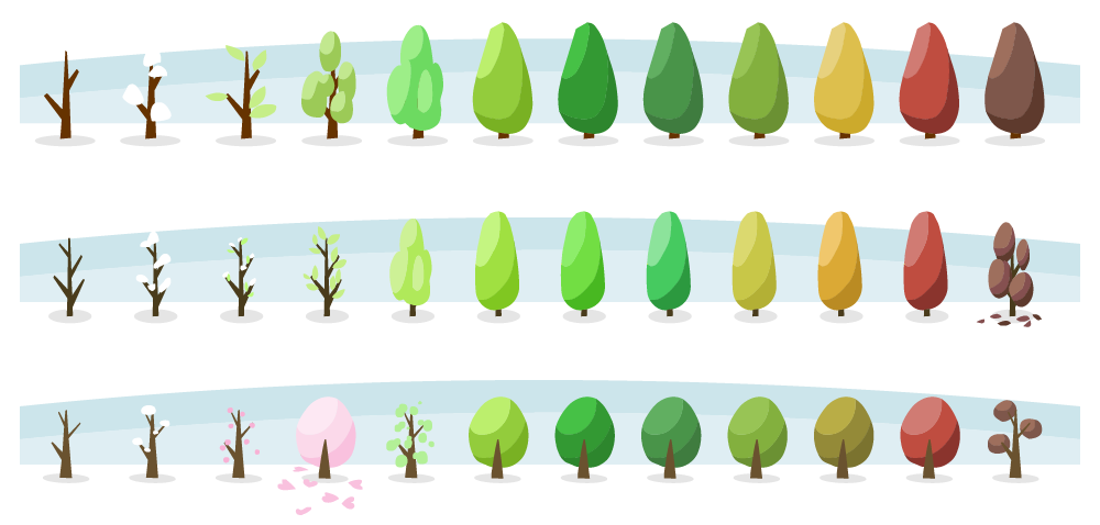 Color variations and seasonal change of trees