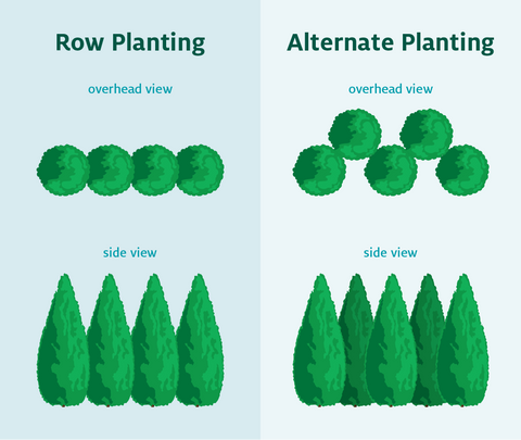 Privacy tree spacing