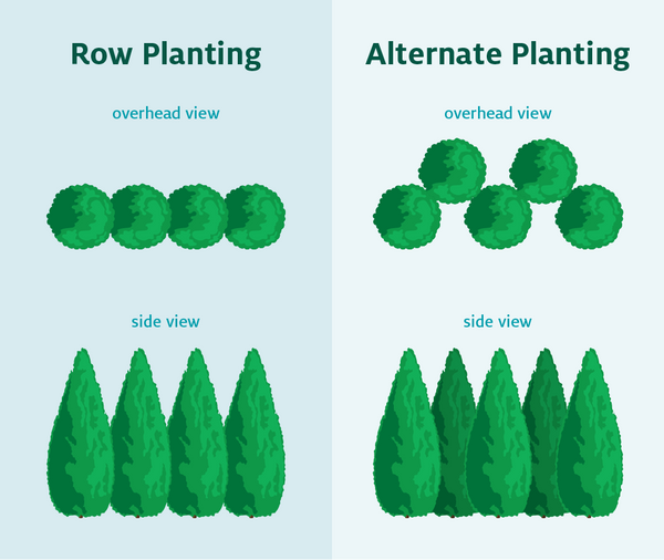 Privacy Tree Spacing Planning