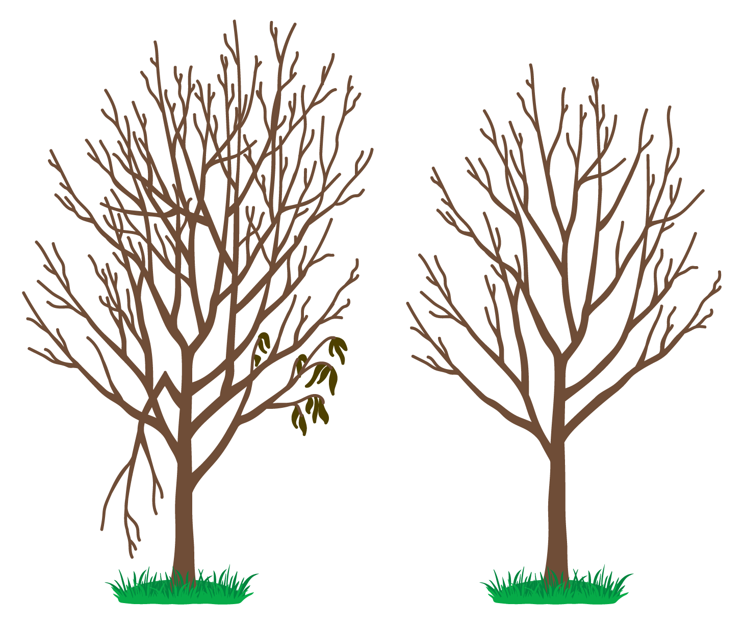 Correct pruning technique.