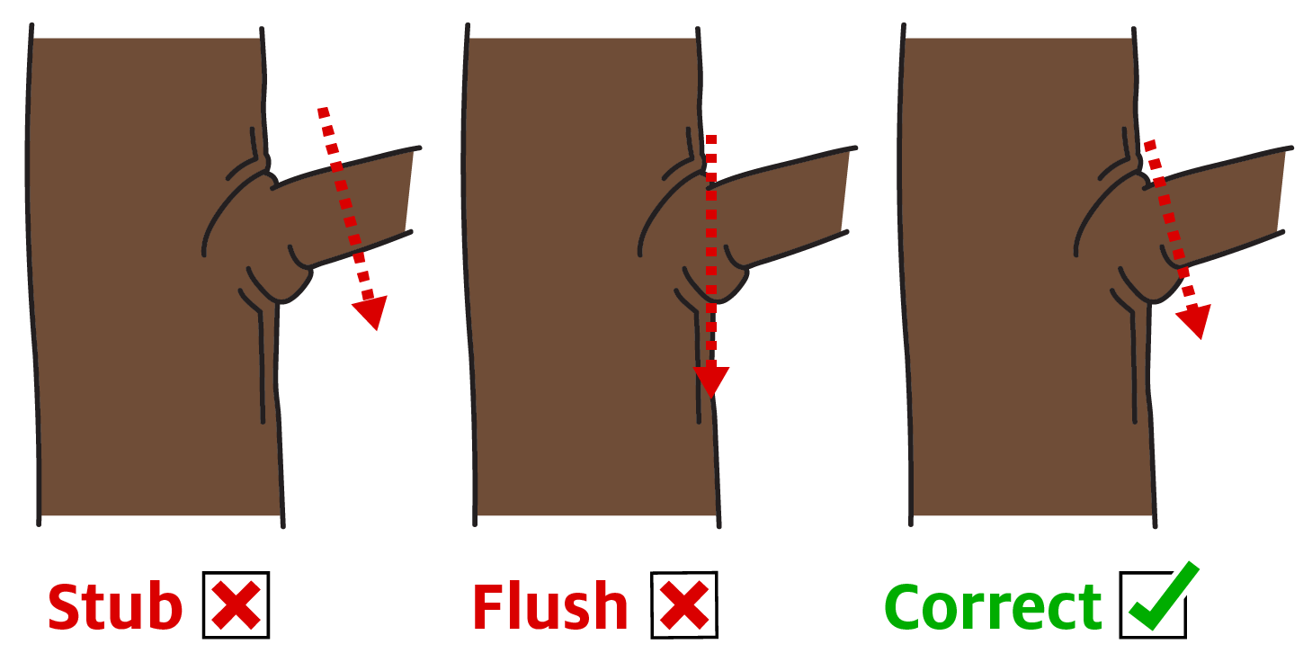 Correct pruning technique