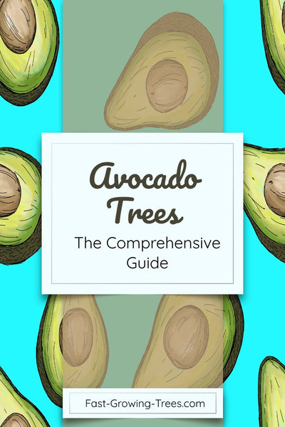 Avocado Trees: Everything You Ever Wanted to Know – FastGrowingTrees com