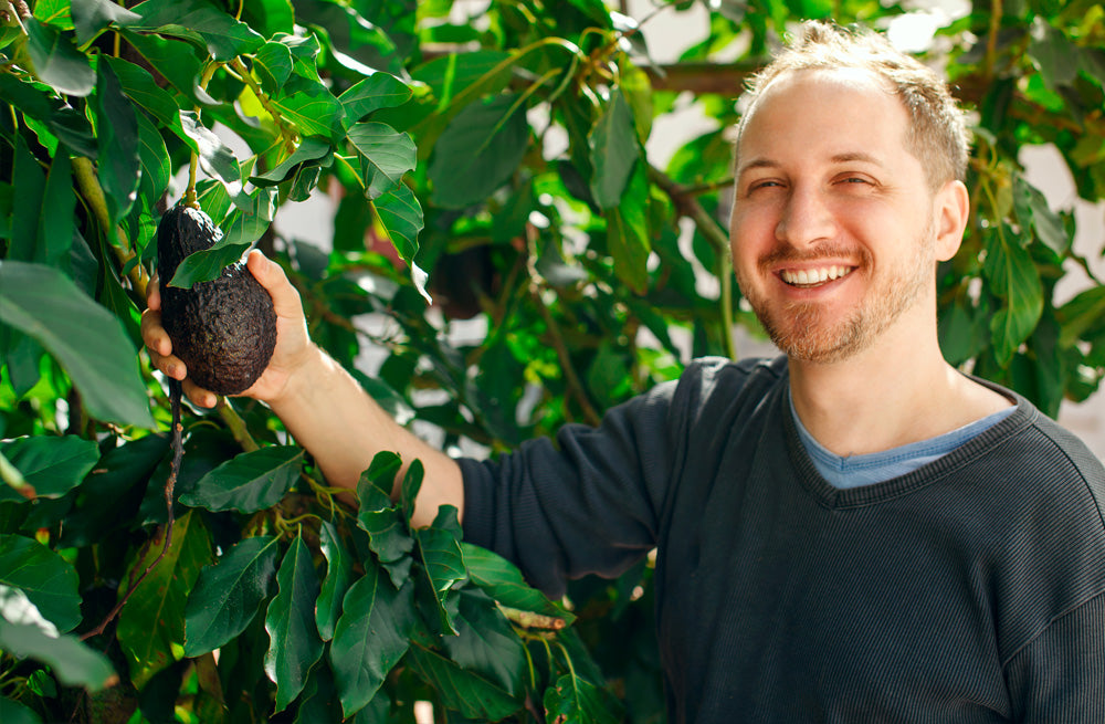 man happily picking avocados from his tree