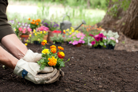 Woman planting flowers in the soil