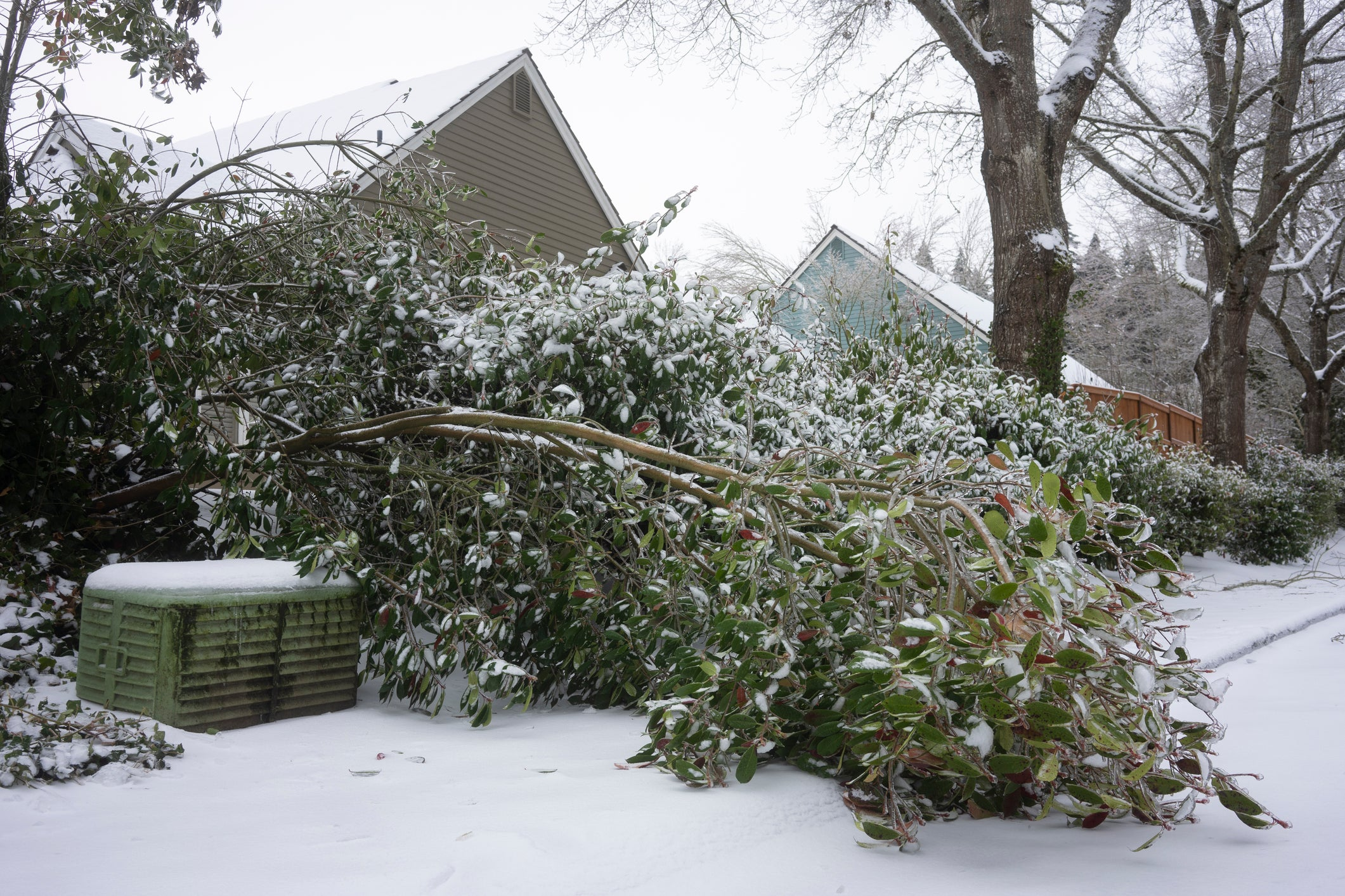 A downed tree after a winter storm.