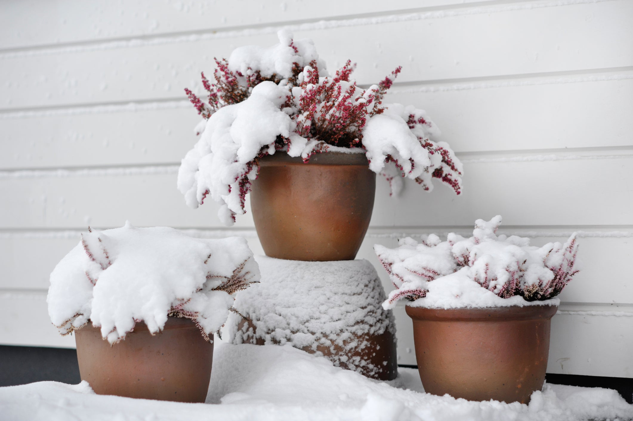 Potted plants covered in snow