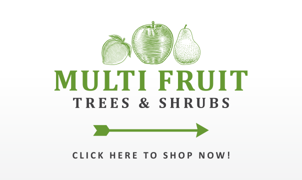 Multi Fruit