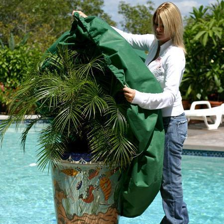 Woman covering a patio plant with a frost blanket