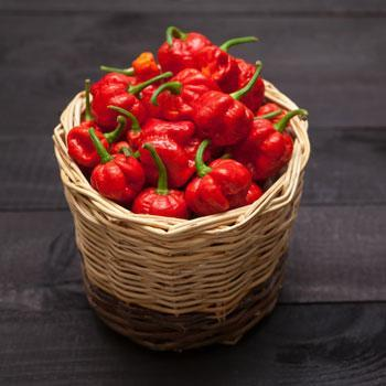 Carolina Reaper Pepper Plant - USDA Organic