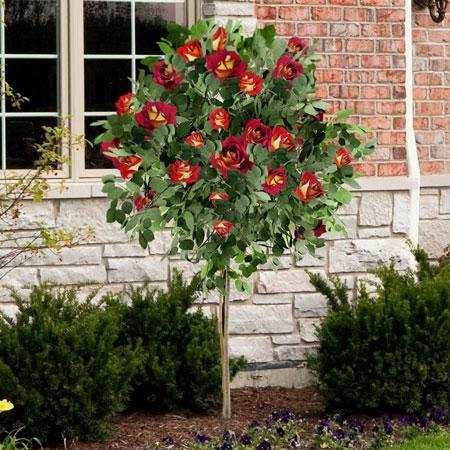 Ketchup & Mustard Rose Tree