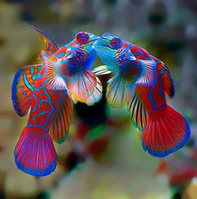 Load image into Gallery viewer, Fish Kisses