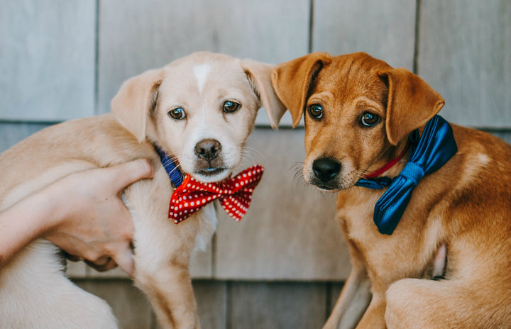 Bow Tie Pet Club Visits Southampton Animal Shelter