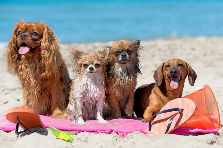 3 Important Summer Safety Tips for Dogs