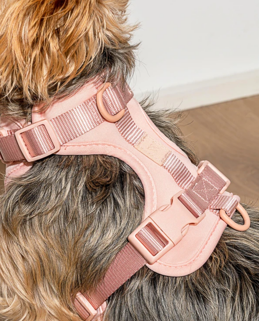 Blush Harness