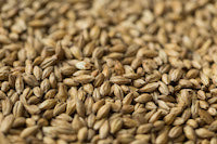 Gladfield Gladiator Malt