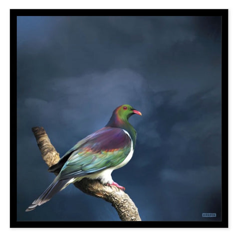 Box Frame - King Kereru