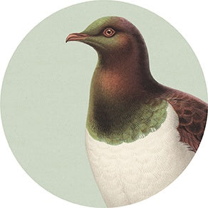 Art spot - Hushed Green Kereru
