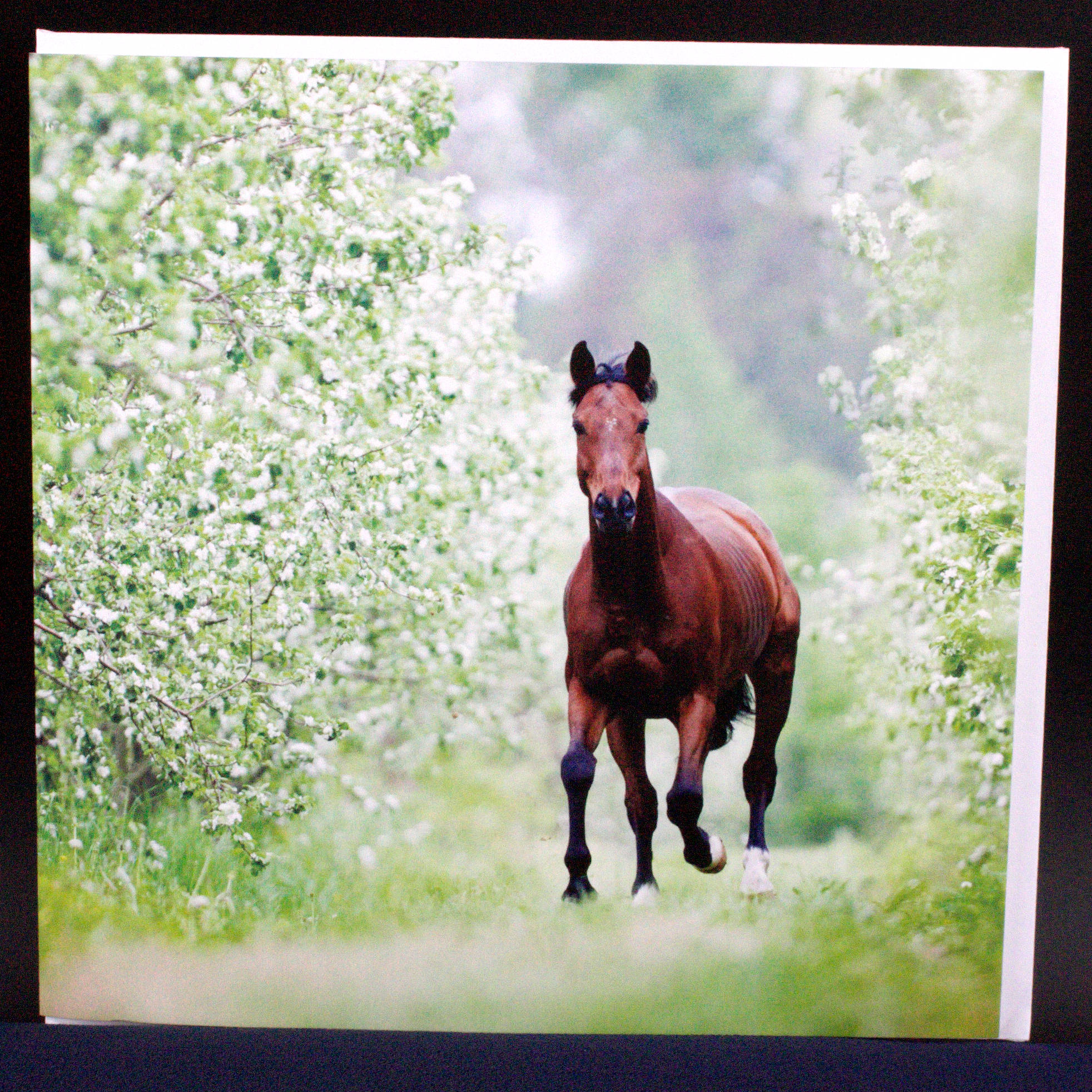 Trakehner Horse & Apple Blosson - Card