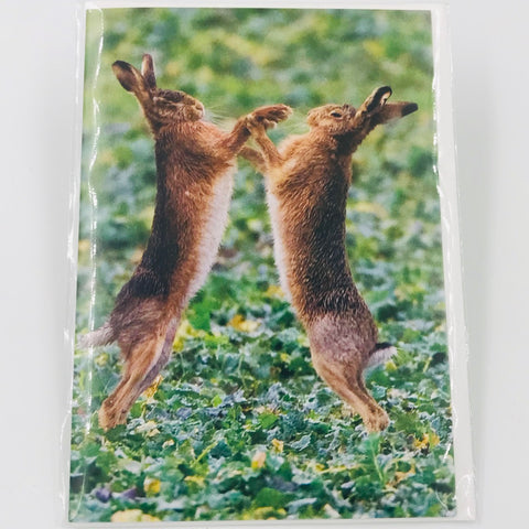 Boxing Hares - Card