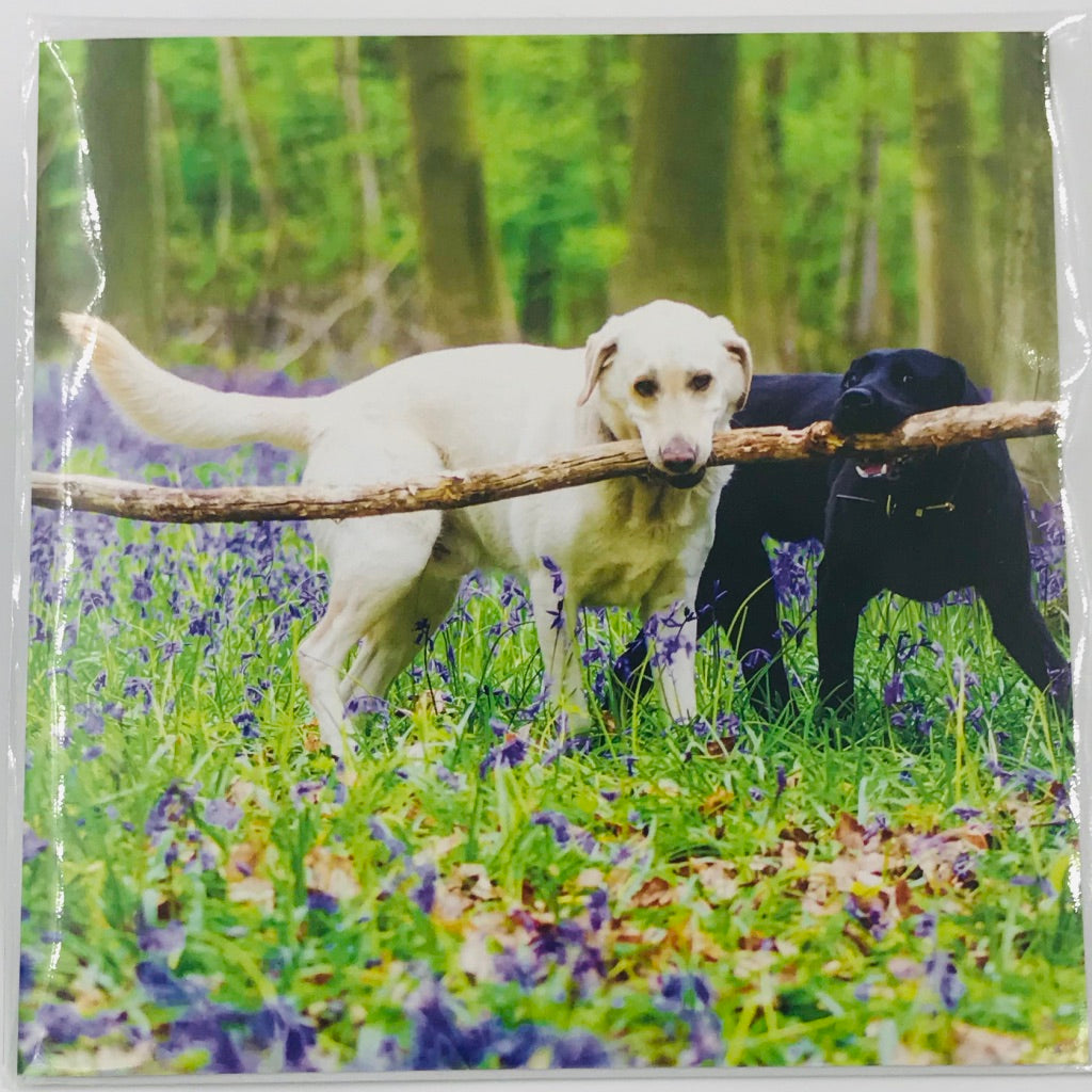 Labradors in the Woods - Card