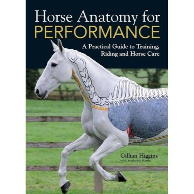 Horse Anatomy and Performance