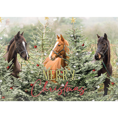 The Three Wise Horses Christmas Cards