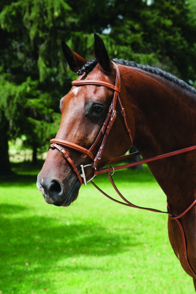 VESPUCCI SINGLE CROWN FANCY RAISED JUMP BRIDLE WITH FLASH