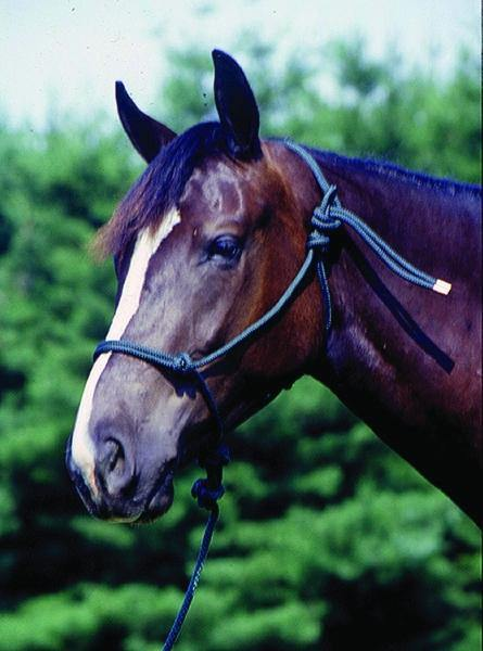 CAVALIER MOUNTAIN ROPE HALTER WITH 8 FT LEAD