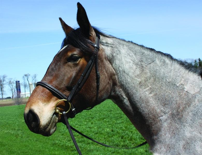 HENDI DE RIVEL ADVANTAGE DRAFT BRIDLE WITH 63 INCH REINS