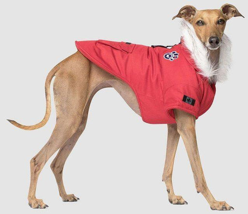 CANADA POOCH FALL WINTER WINTER WILDERNESS RED - TackN'Bark