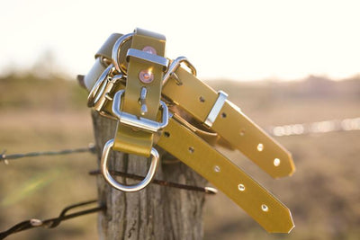 Dog Collar Large JT