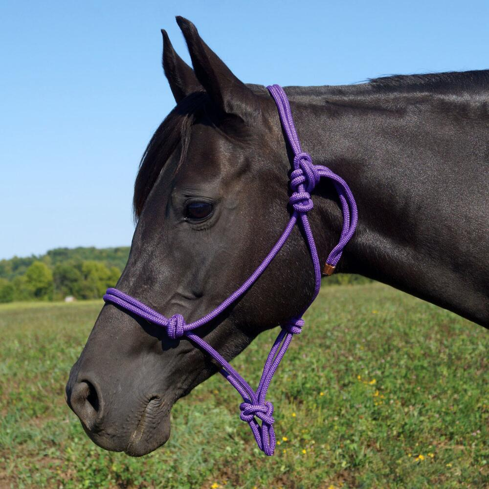 Rancher Rope Halter Mini