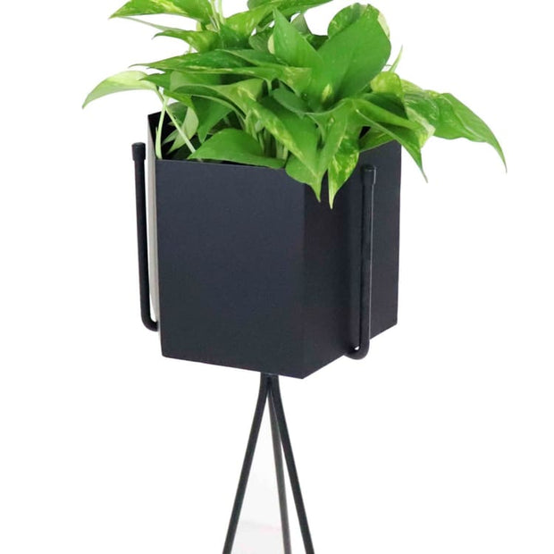 Radiant Black Free Standing Planter - Home And Style