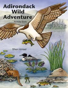 Adirondack Wild Adventure Activity Book