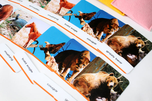 Montessori 3-part cards, 45 Animals of the World