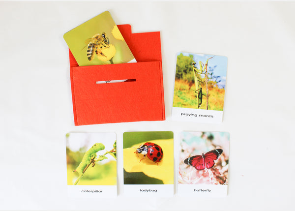 Montessori flashcards, 14 Insects, Safari Toobs