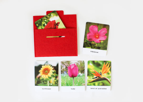 Types of Flowers, Montessori flashcards, Safari Toobs