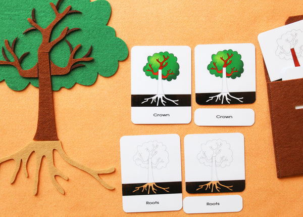 Montessori complete botany set with small 3-part cards