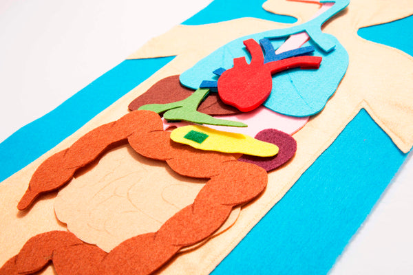 Human organs felt playmat with 3 part cards