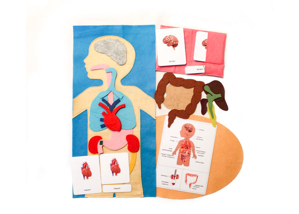 Human organs felt playmat and large 3-part cards