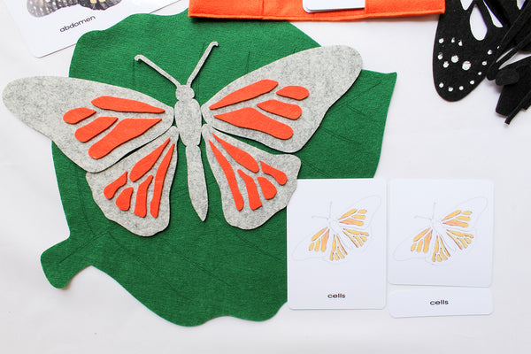 Parts of a butterfly felt board with 3-part cards