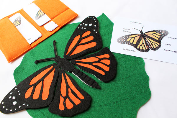 Parts of and the life cycle of a butterfly felt mat bundle