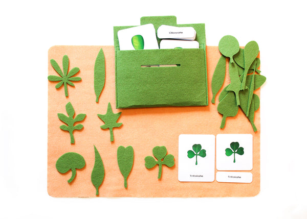 20 Shapes of leaves with 3-part cards