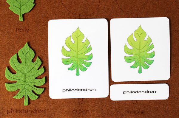 Types of tree leaves playmat with 3 part cards