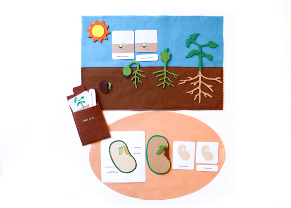 Life cycle of a bean plant playmat & Parts of a seed