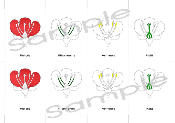 Digital Download, Parts of a flower, Montessori 3 part cards