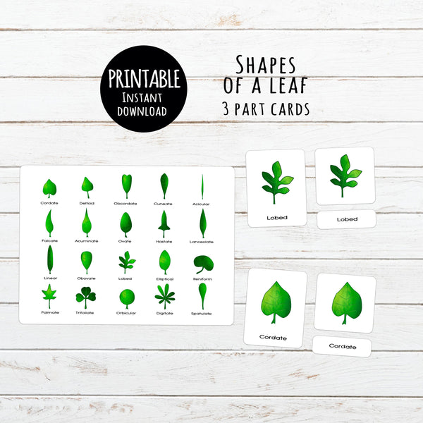Digital Download, Leaf shapes, Montessori 3 part cards