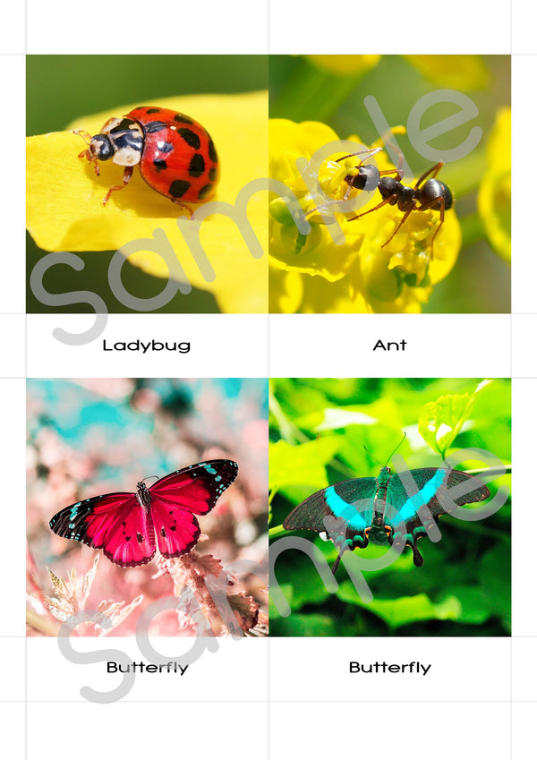 Digital Download, Insects large 3-part cards, Safari Toobs