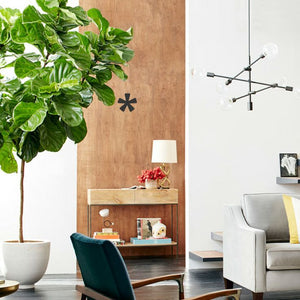 Plant Therapy: Indoor Plants that Improve Health and Wellbeing